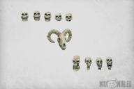 Skulls (10)